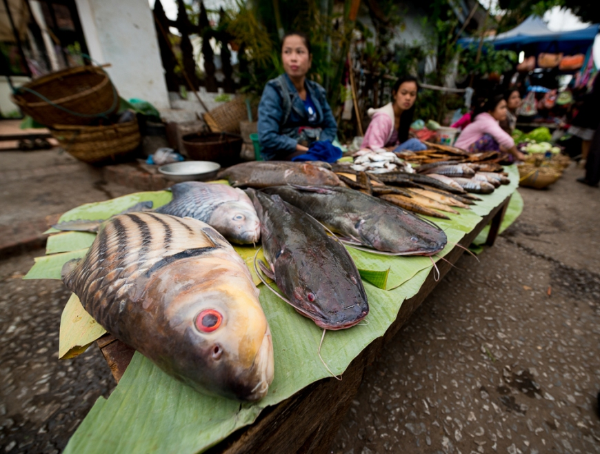 Fish for sale at Morning Market, Luang Prabang, Laos, Indochina, Asia