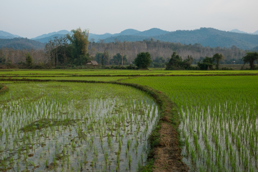 Rice Paddies near Luang Prabang, Laos, Indochina, Asia