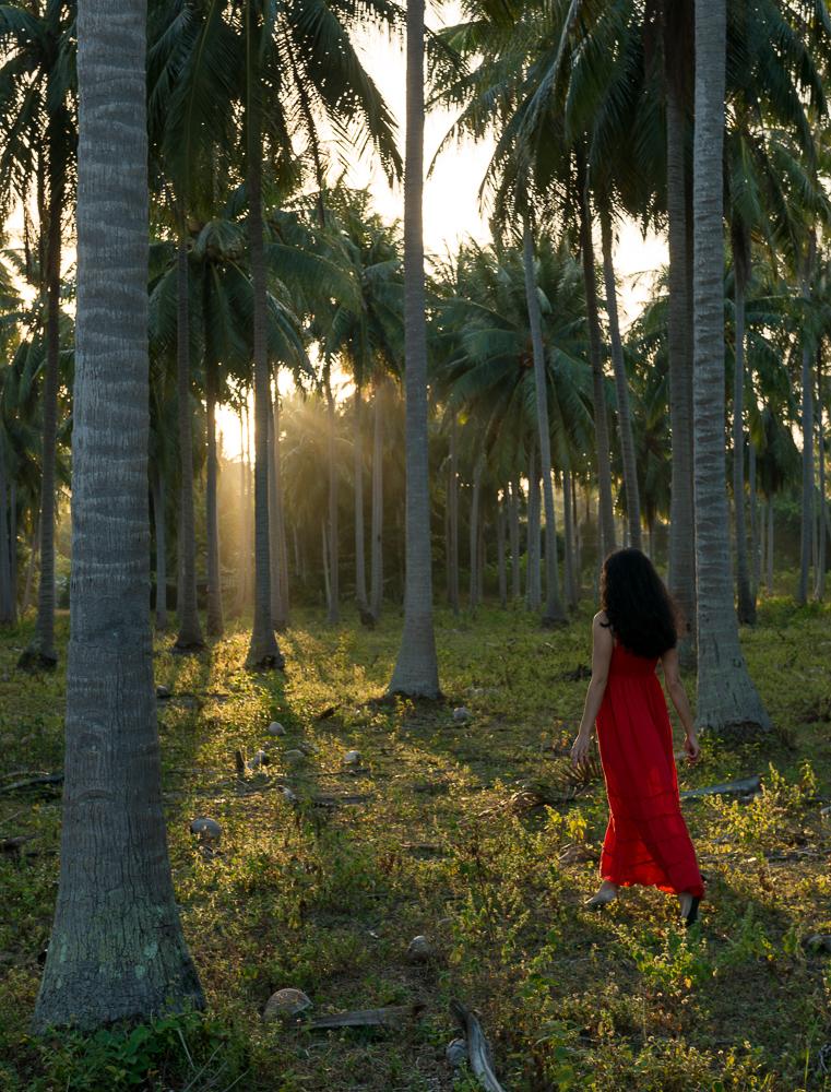Palm Trees, Ko Samui Island, Surat Thani, Thailand