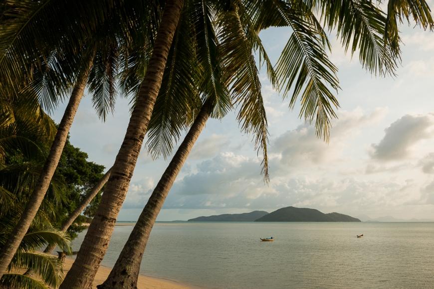 Palm Trees, Thong Krut Beach, Ko Samui Island, Surat Thani, Thailand