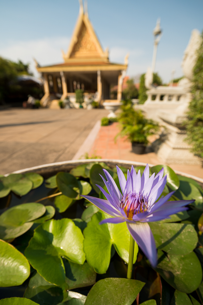 Lotus Pond, Royal Palace, Phnom Penh, Cambodia