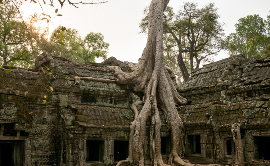 Temple of Ta Prohm, Angkor, Siem Reap, Cambodia