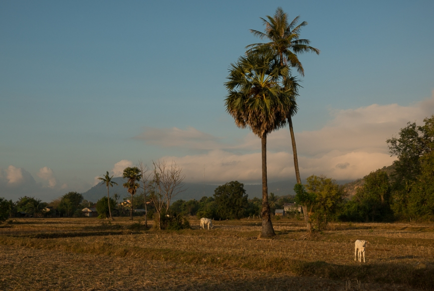 Rural scene, Fields near, Kampot, Cambodia, Indochina, Asia