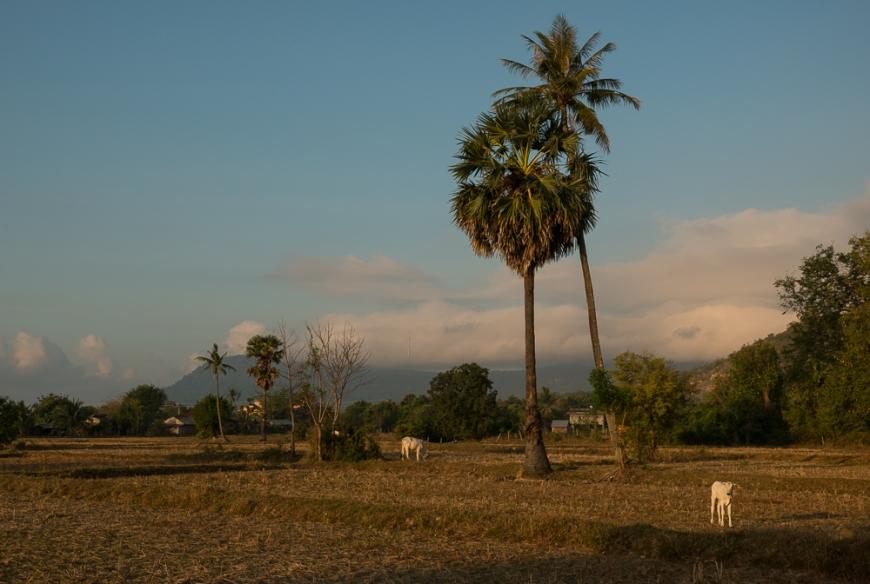 Rural scene, Fields near, Kampot, Cambodia, Indochina, Asia