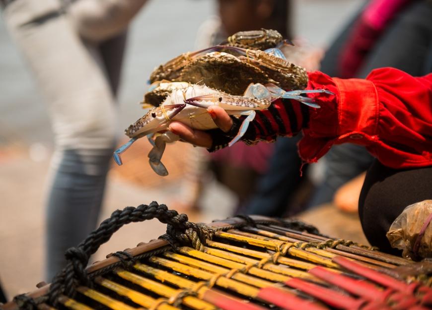Crab Market, Kep, Kep Province, Cambodia, Indochina, Asia