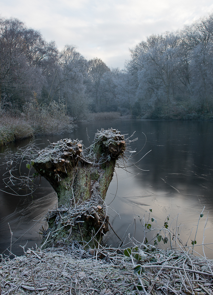 Hampstead Heath in winter frost, London, UK