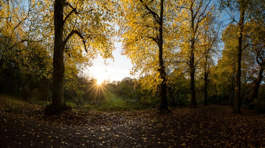 Hampstead Heath at dawn, Hampstead, London, UK