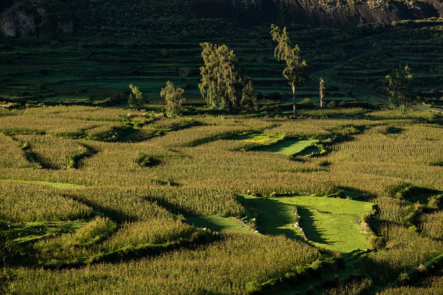 View of fields near Cabanaconde at dawn, Colca Canyon, Peru