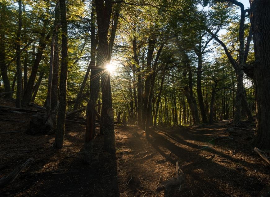 Autumn colours in woods on the path to Mount Fitz Roy, El Chaltén, Los Glaciares National Park, Santa Cruz Province, Argentina