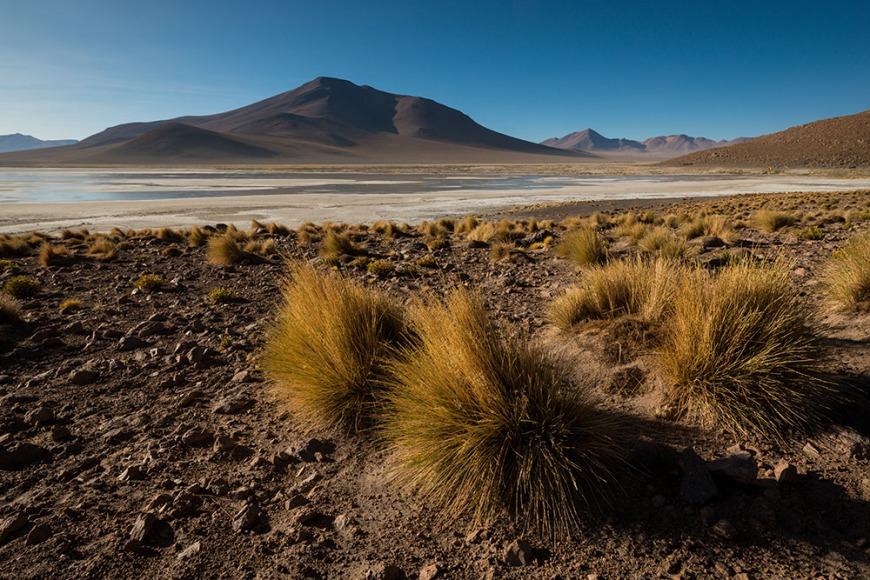 Laguna Polques, Reserva Eduardo Avaroa, Bolivia