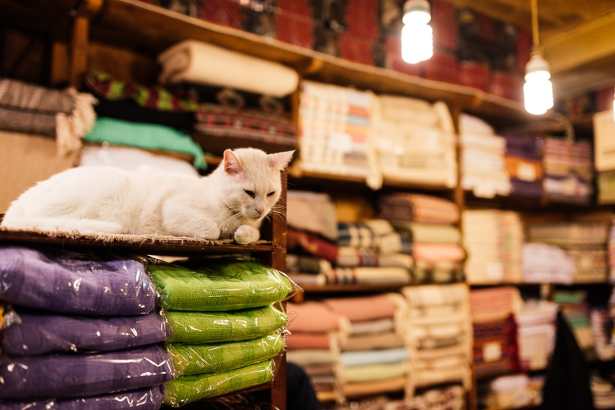 Cat sleeping in textile store, Grand Bazaar, Istanbul, Turkey