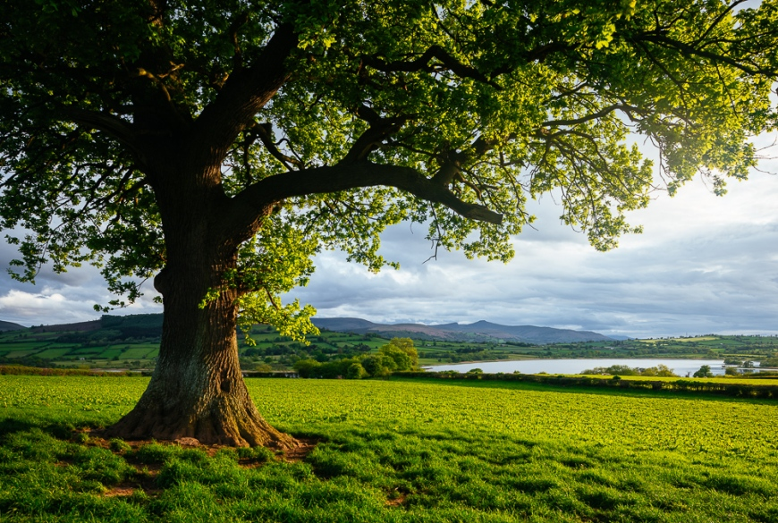 Usk Valley in afternoon light, Brecon Beacons, POWYS, Wales