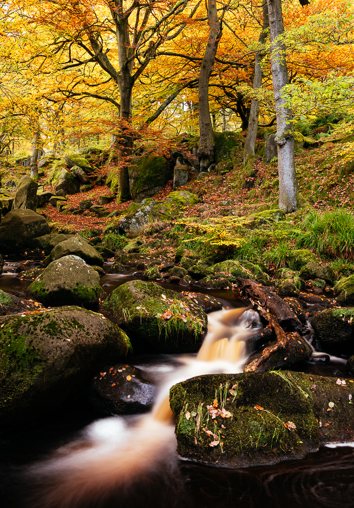 Padley Gorge, Peak District, Derbyshire, England, UK