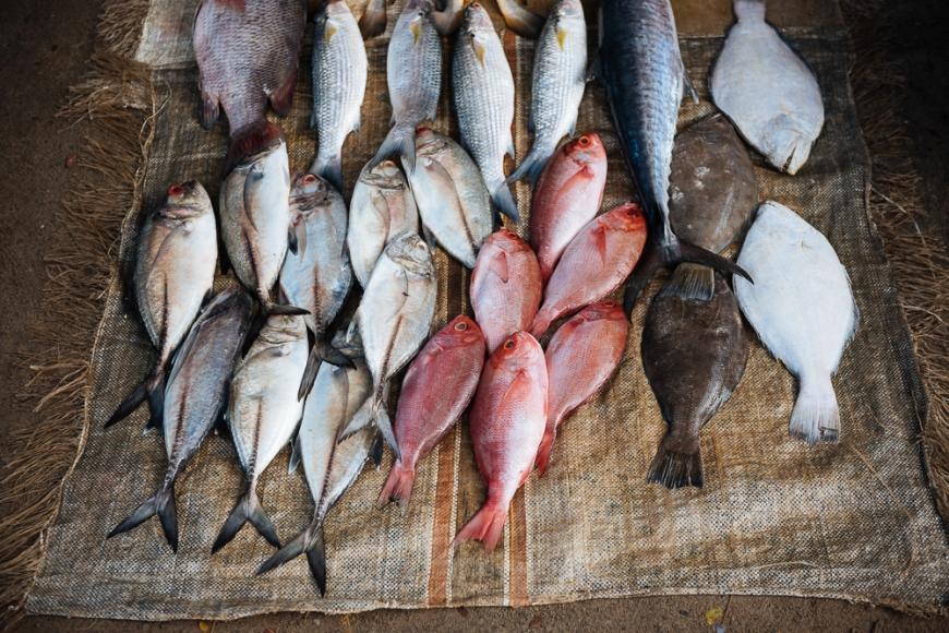 Freshly caught fish on display on the harbourside market, Fort Kochi (Cochin), Kerala, India