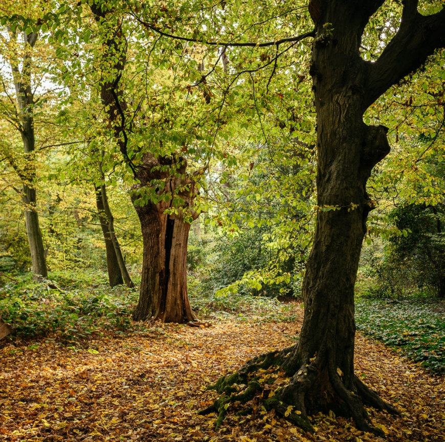 Epping Forest in Autumn, London, UK