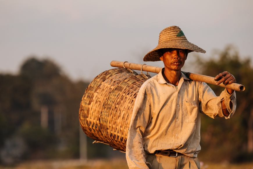 Man working in Paddy fields near Hsipaw, Shan State, Myanmar, Asia