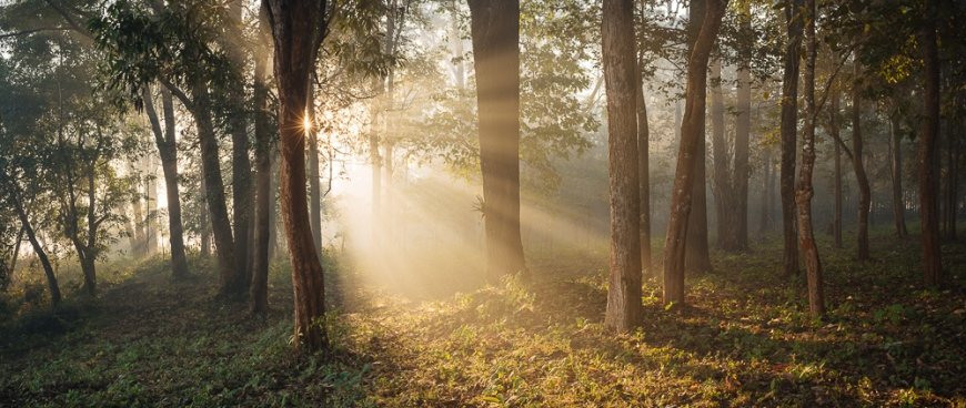Sunrise through misty woods near Hsipaw, Shan State, Myanmar, Asia
