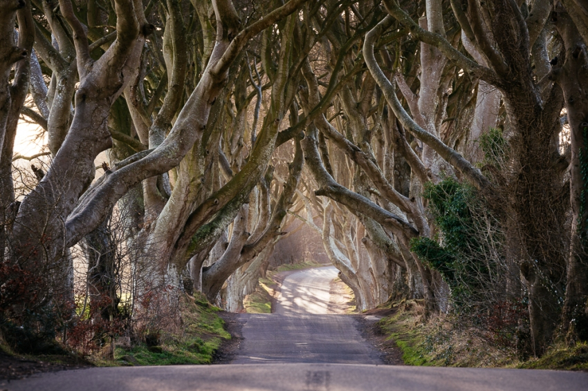 The Dark Hedges, Breagah Road, County Antrim, Northern Ireland
