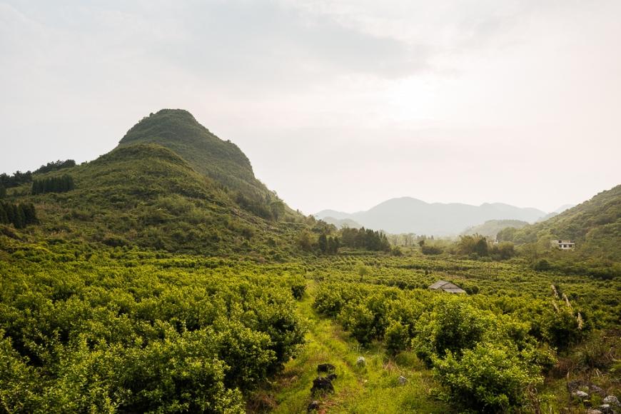 Landscape near Xingping, Guilin, Guangxi Province, China