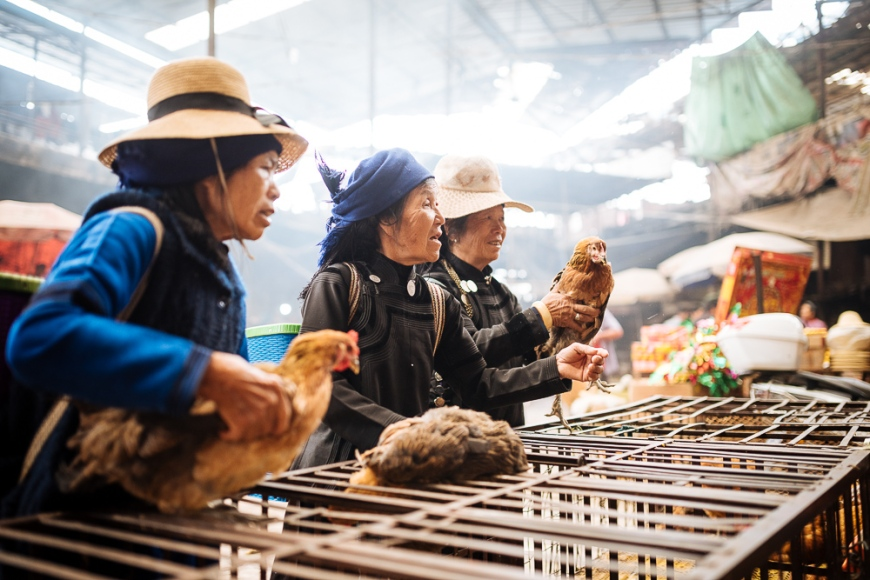 Women bartering over chicken sale at Xinjie Local Market, Yuanyang, Yunnan Province, China