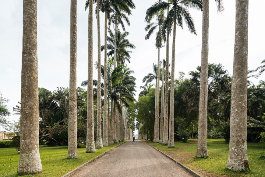 Palm Trees in Aburi Botanical Gardens, Accra, Ghana, Africa