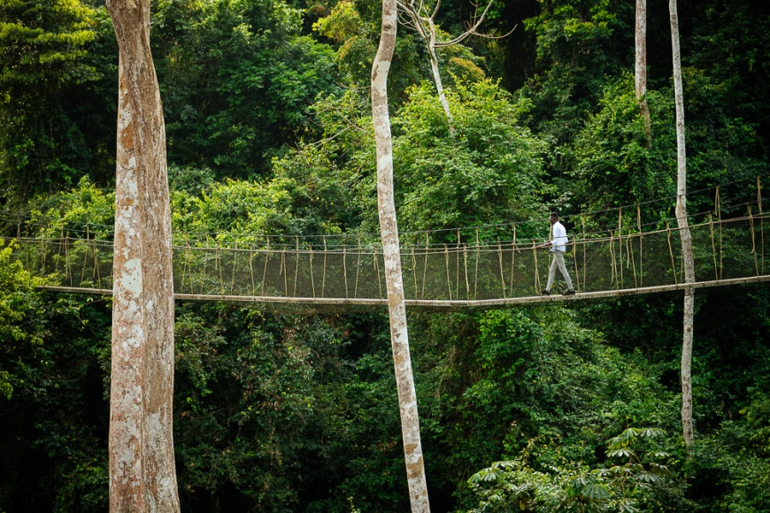 Canopy Walkway through tropical rainforest in Kakum National Park, Ghana, Africa