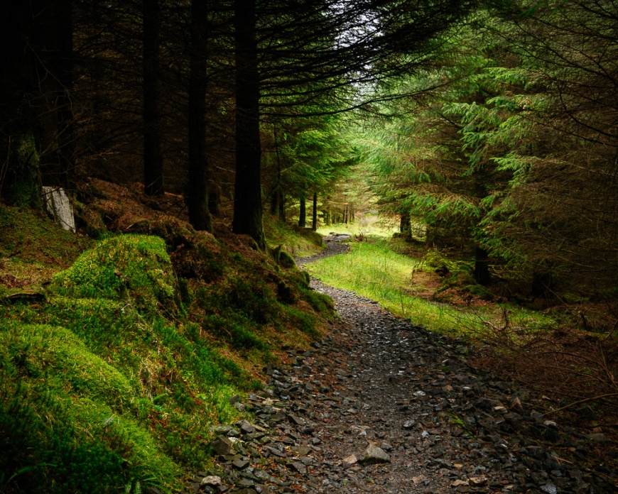 Grizedale Forest, Lake District, Cumbria, England, United Kingdom