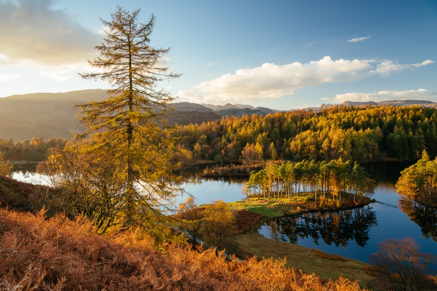 Autumn afternoon light at Tarn Hows, Lake District, Cumbria, England, United Kingdom