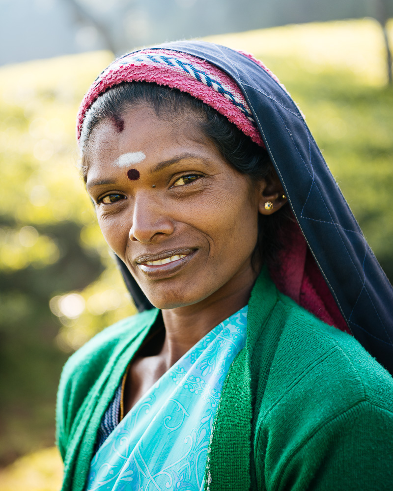 Selvanayagie working as a Tea Picker in Pedro Tea Plantation in the Highlands, Nuwara Eliya, Central Province, Sri Lanka, Asia