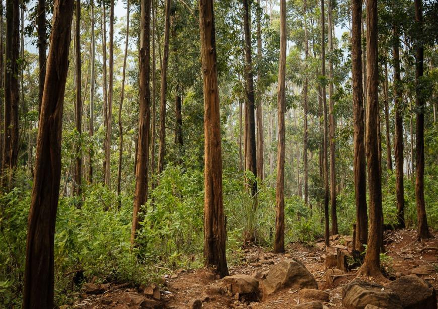 Path up to Ella Rock, Ella, Uva Province, Sri Lanka, Asia