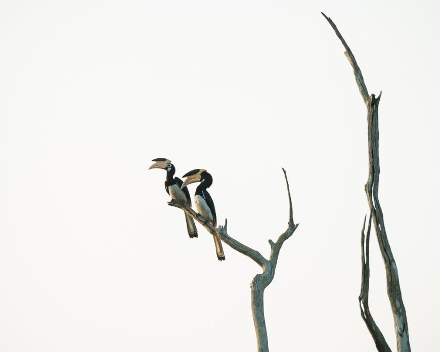 Uda Walawe National Park, Uva Province, Sri Lanka, Asia