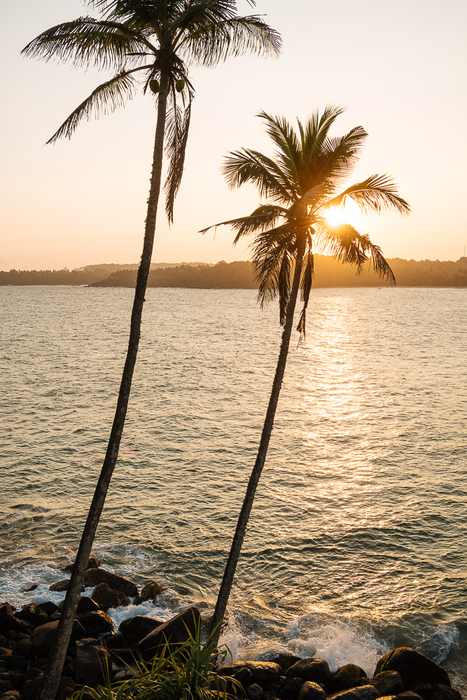 Sunset behind palm trees, Talalla Beach, South Coast, Sri Lanka, Asia
