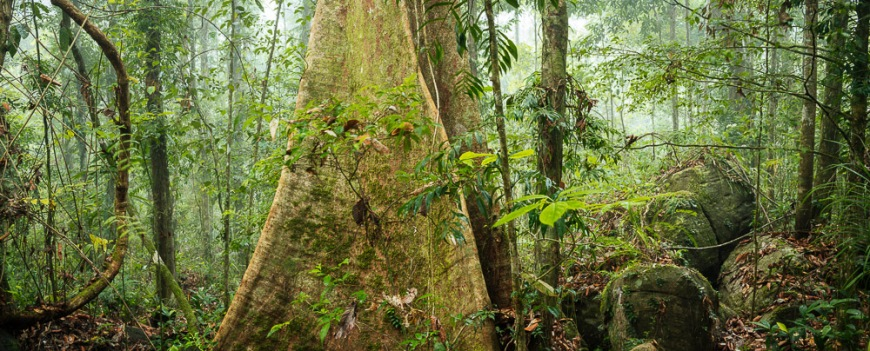 Sinharaja Rainforest National Park, Deniyaya, Southern Province, Sri Lanka, Asia