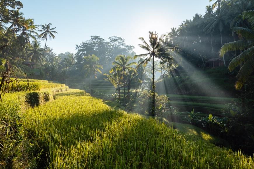 Tegalalang Rice Terraces near Ubud, Bali, Indonesia