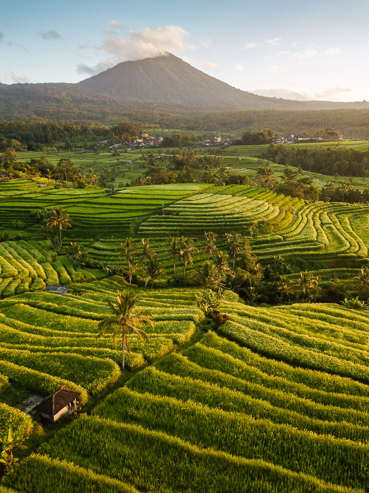 Aerial View of Jatiluwih Rice Terraces, Tabanan, Bali, Indonesia