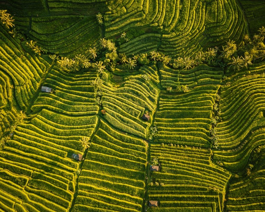 Aerial View of Jatiluwih Rice Terraces, Tabanan, Bali, Indonesia