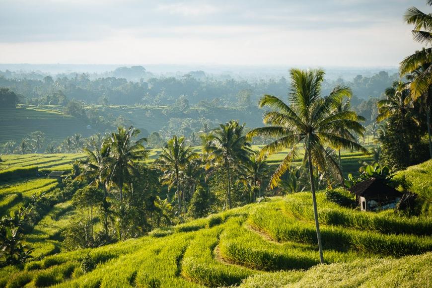 Jatiluwih Rice Terraces, Tabanan, Bali, Indonesia