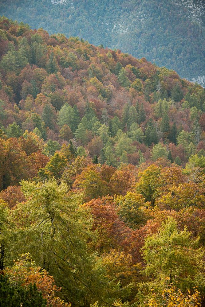 View of Autumn Foilage from Vogel Ski Resort, Triglav National Park, Upper Carniola, Slovenia