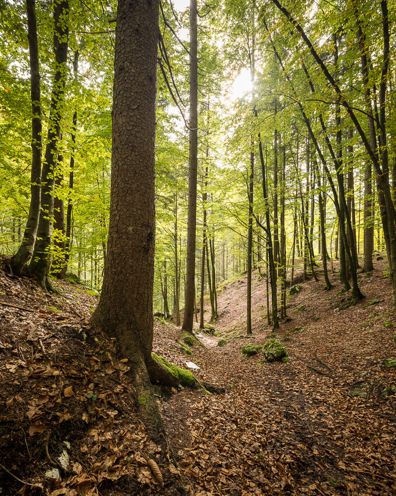 Woods near Pericnik Waterfall, Triglav National Park, Upper Carniola, Slovenia