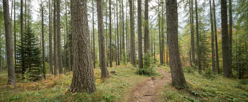 Woods, Vrsic Pass, Julian Alps, Triglav National Park, Upper Carniola, Slovenia