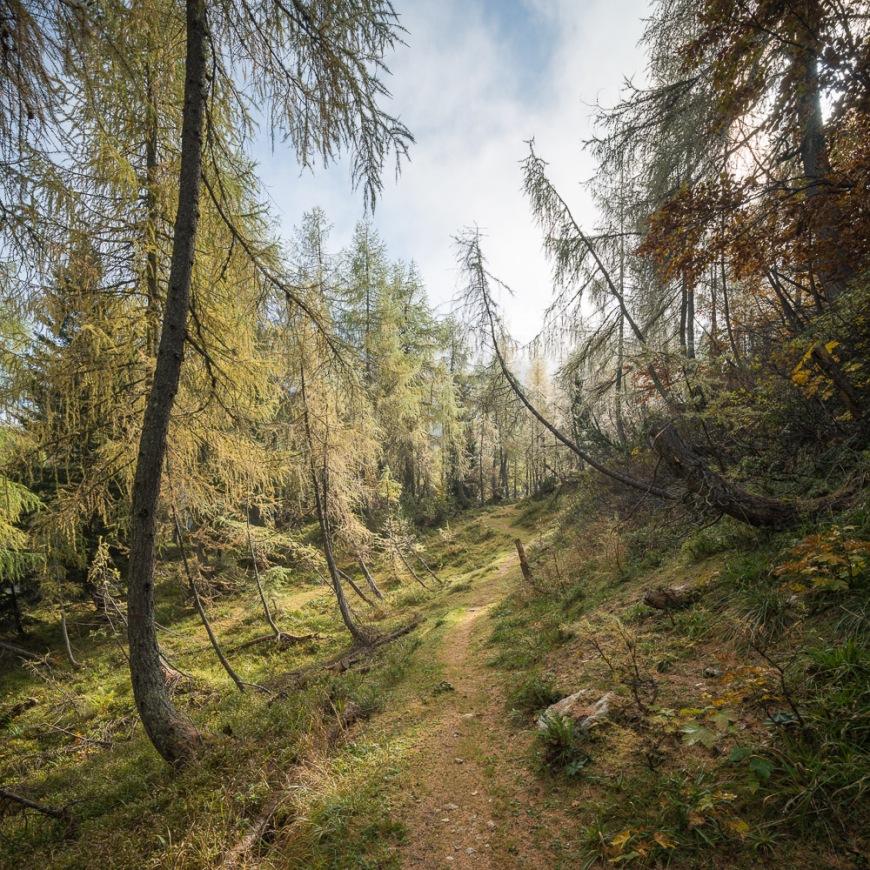 Path through Forest, Vrsic Pass, Julian Alps, Triglav National Park, Upper Carniola, Slovenia